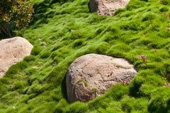 Pedra grande na grama verde no jardim Fotografia de Stock