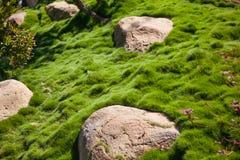 Pedra grande na grama verde no jardim e no parque Fotografia de Stock Royalty Free