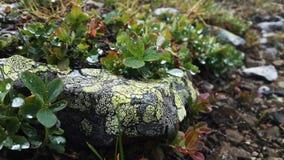 Pedra manchada Fotografia de Stock Royalty Free