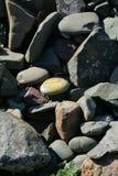 Pedra memorável ao ` nosso ` moggy em um cemitério em Escócia fotos de stock