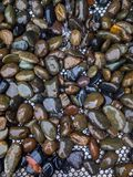 Pedra molhada da lua Foto de Stock Royalty Free