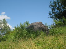 Pedra na grama Fotos de Stock