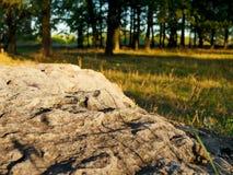 Pedra na pedra grande da floresta A do outono no parque Close-up de pedra Foto de Stock Royalty Free