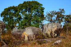 Pedra na montanha de Phu Rua Foto de Stock