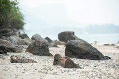 Pedra na praia da areia Fotografia de Stock