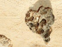 A pedra na praia olha como o coração Imagem de Stock Royalty Free