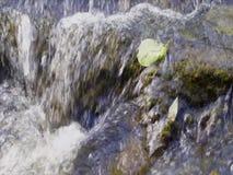 Pedra no fluxo do rio video estoque