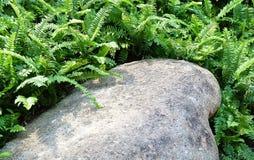 Pedra no jardim com samambaias verdes Fotos de Stock