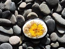 Pedra pintada natural com a flor secada amarelo imagens de stock
