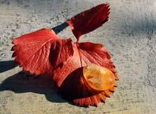 Pedra preciosa citrina Imagens de Stock Royalty Free