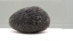 Pedra preta Imagem de Stock