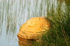 Pedra solitário Foto de Stock