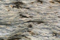 A pedra tornou-se de madeira Imagens de Stock