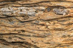 A pedra tornou-se de madeira Imagem de Stock