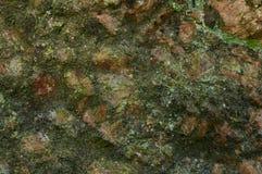 Pedra velha do granito do fundo da natureza coberta com o musgo Foto de Stock Royalty Free