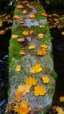 Pedra velha em japão Imagem de Stock Royalty Free