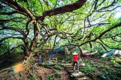 A pedra velha fez o templo em Miaoli, Taiwan Imagens de Stock
