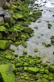 Pedra verde Fotos de Stock Royalty Free
