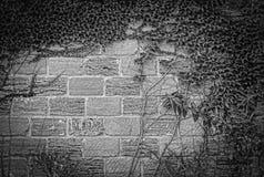 Pedra verde l do tijolo da planta da natureza da folha foto de stock