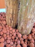 Pedra vermelha Foto de Stock