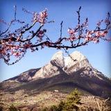 Pedraforca,与桃红色苹果树的西班牙美丽的山开花 免版税图库摄影