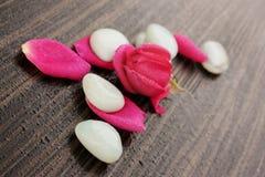 Pedras brancas com pétalas cor-de-rosa Foto de Stock