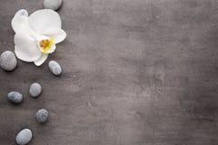 Pedras brancas da orquídea e dos termas no fundo cinzento Fotografia de Stock Royalty Free
