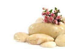 Pedras brancas e flor cor-de-rosa Fotos de Stock