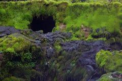 Pedras cobertas com o musgo Fotografia de Stock Royalty Free