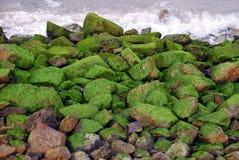 Pedras cobertas com o seawee imagens de stock