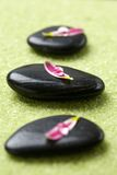Pedras com pétalas da flor Fotos de Stock Royalty Free
