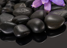 Pedras com uma flor Imagem de Stock Royalty Free