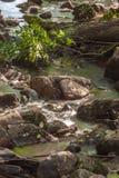 Pedras da cachoeira do rio da floresta Fotografia de Stock