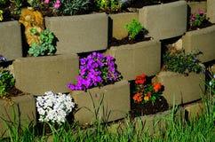 Pedras da flor no jardim Fotografia de Stock