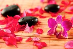 Pedras da terapia com pétalas Imagem de Stock