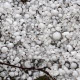 Pedras de granizo na terra após a chuva de granizo, saraiva do grande tamanho, saraiva feita sob medida com uma moeda maior imagem de stock royalty free