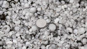Pedras de granizo na terra após a chuva de granizo, saraiva do grande tamanho, saraiva feita sob medida com uma moeda maior foto de stock