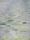 Pedras de pavimentação e grama Fotos de Stock