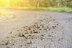 Pedras dispersadas na estrada asfaltada, fotos de stock royalty free