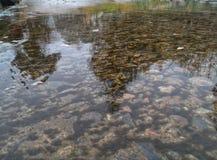 Pedras do rio da montanha e plantas aquáticas com reflexão na superfície Foto de Stock Royalty Free