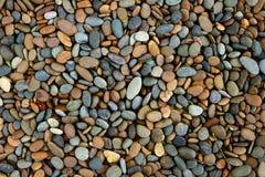 Pedras do seixo no jardim Imagem de Stock Royalty Free