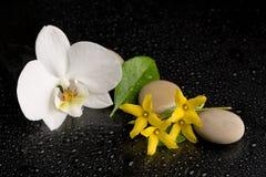 Pedras do zen com a flor da orquídea no preto Fotos de Stock Royalty Free