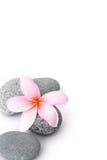 Pedras dos termas com o frangipani no fundo branco Imagens de Stock