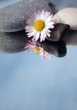 Pedras dos termas e flor branca Imagens de Stock Royalty Free
