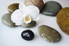 Pedras dos termas e flor da orquídea Fotos de Stock