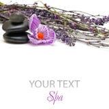 Pedras dos termas e flores da mola Foto de Stock Royalty Free