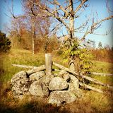 Pedras e árvore Fotos de Stock Royalty Free