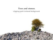 Pedras e árvores Fotos de Stock