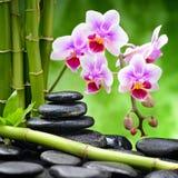 Pedras e bambu do zen Fotografia de Stock