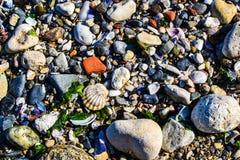 Pedras e escudos do mar fotografia de stock